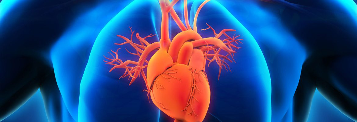 the-magic-element-of-cardiovascular-health-nitric-oxide