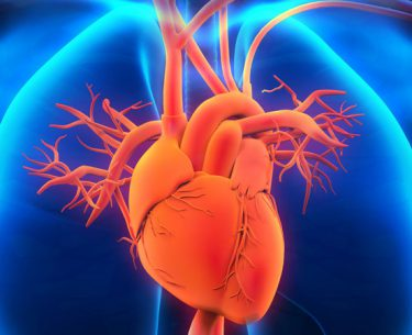 The magic element of cardiovascular health: Nitric Oxide